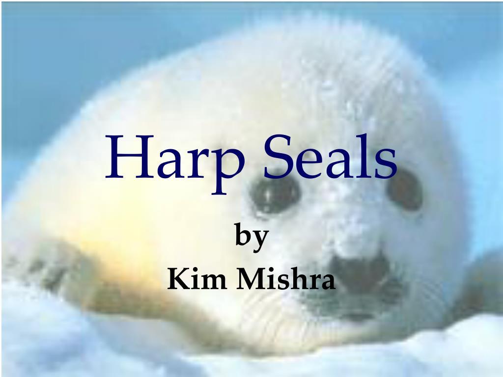 harp seals l.