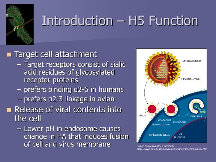 Introduction h5 function