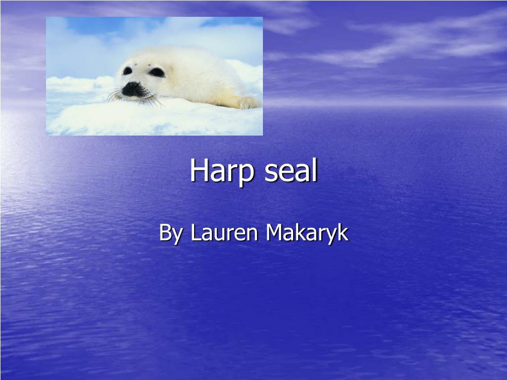 harp seal l.