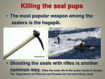 killing the seal pups