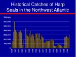 historical catches of harp seals in the northwest atlantic