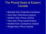 the phocid seals of eastern canada