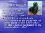 californian sea lion7