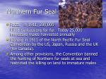 northern fur seal14