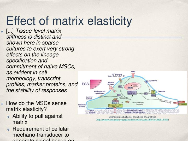 Effect of matrix elasticity