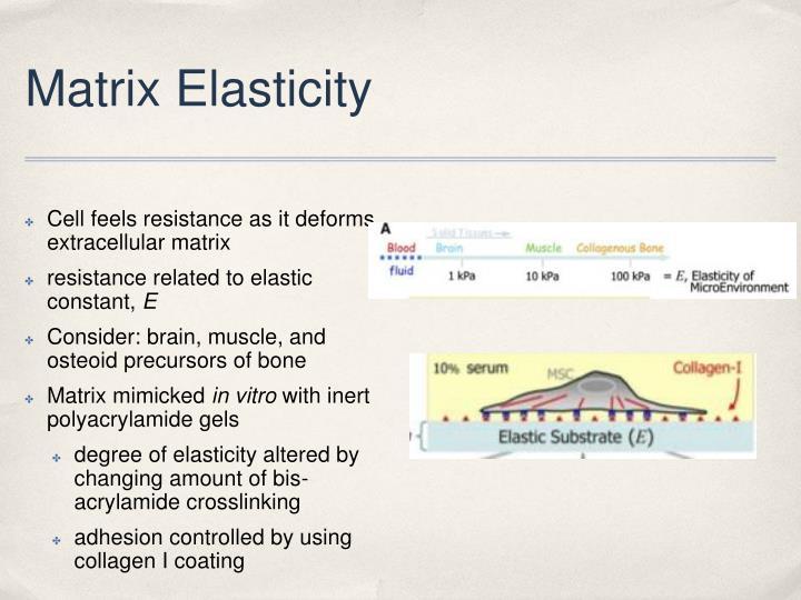 Matrix Elasticity