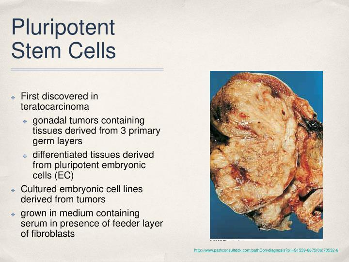 Pluripotent Stem Cells