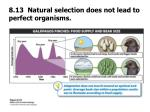 8 13 natural selection does not lead to perfect organisms