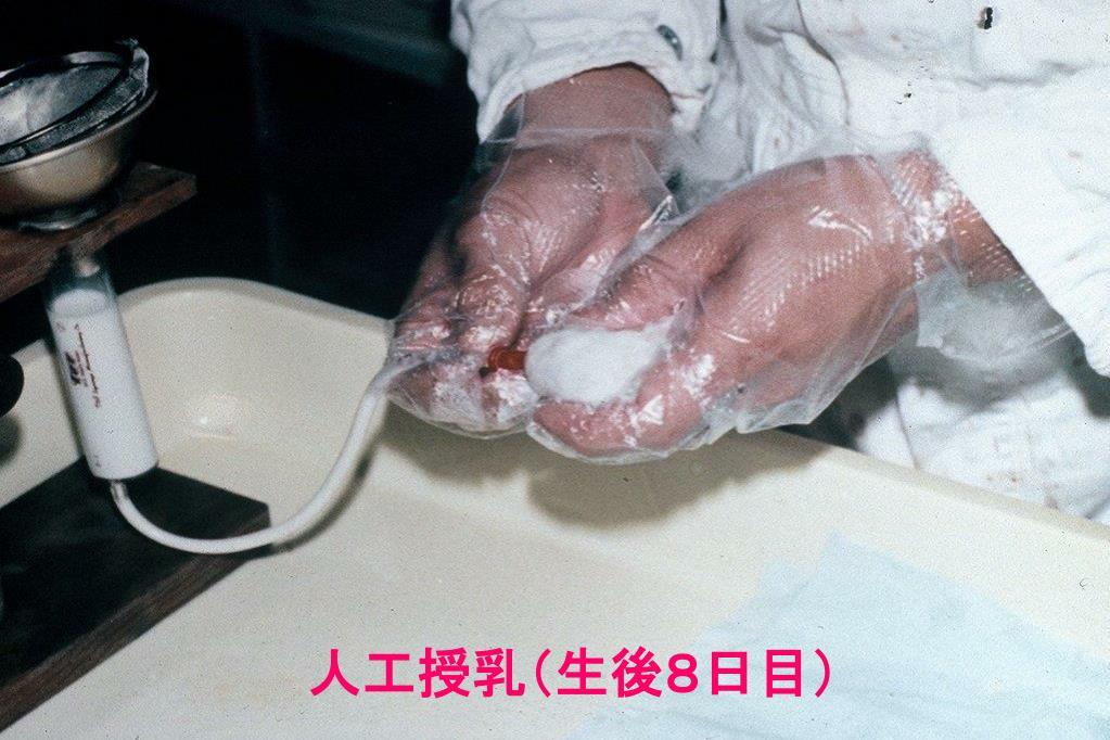 人工授乳(生後8日目)