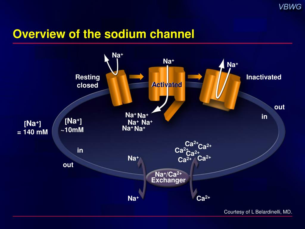 Overview of the sodium channel