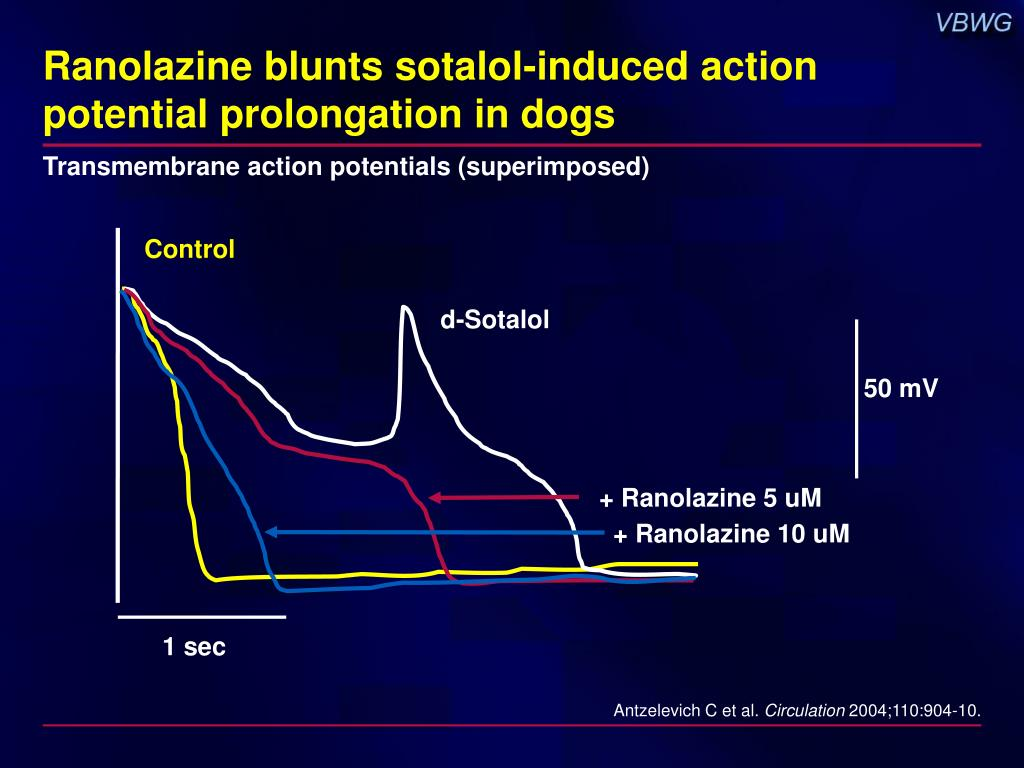 Ranolazine blunts sotalol-induced action potential prolongation in dogs