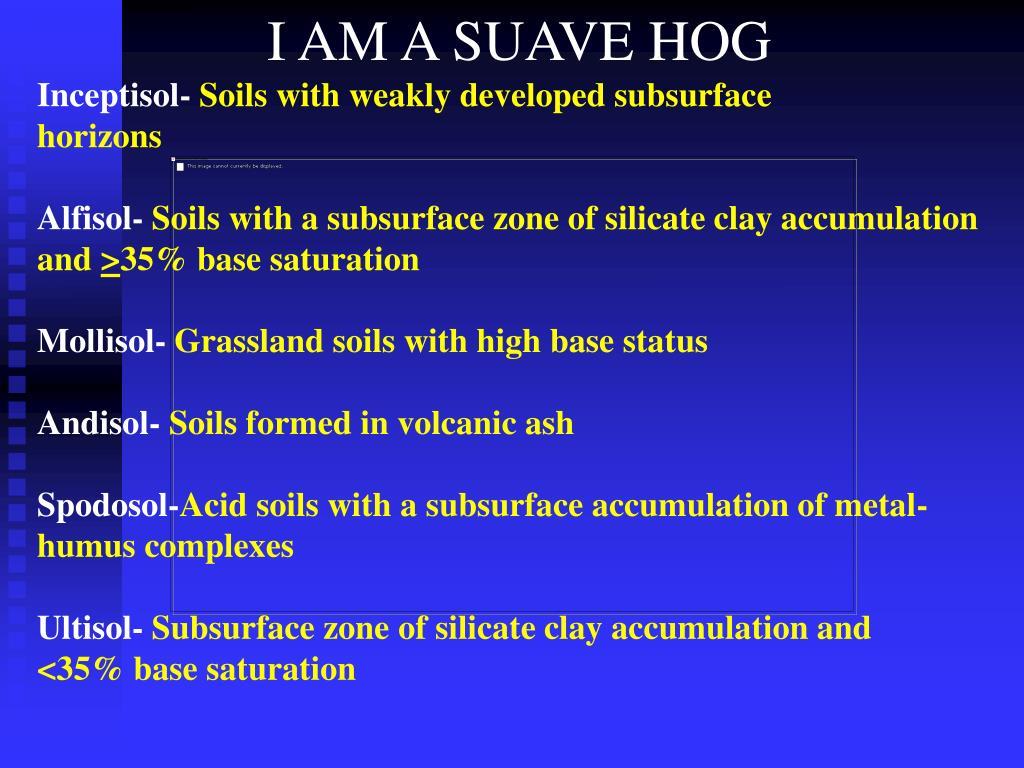 I AM A SUAVE HOG