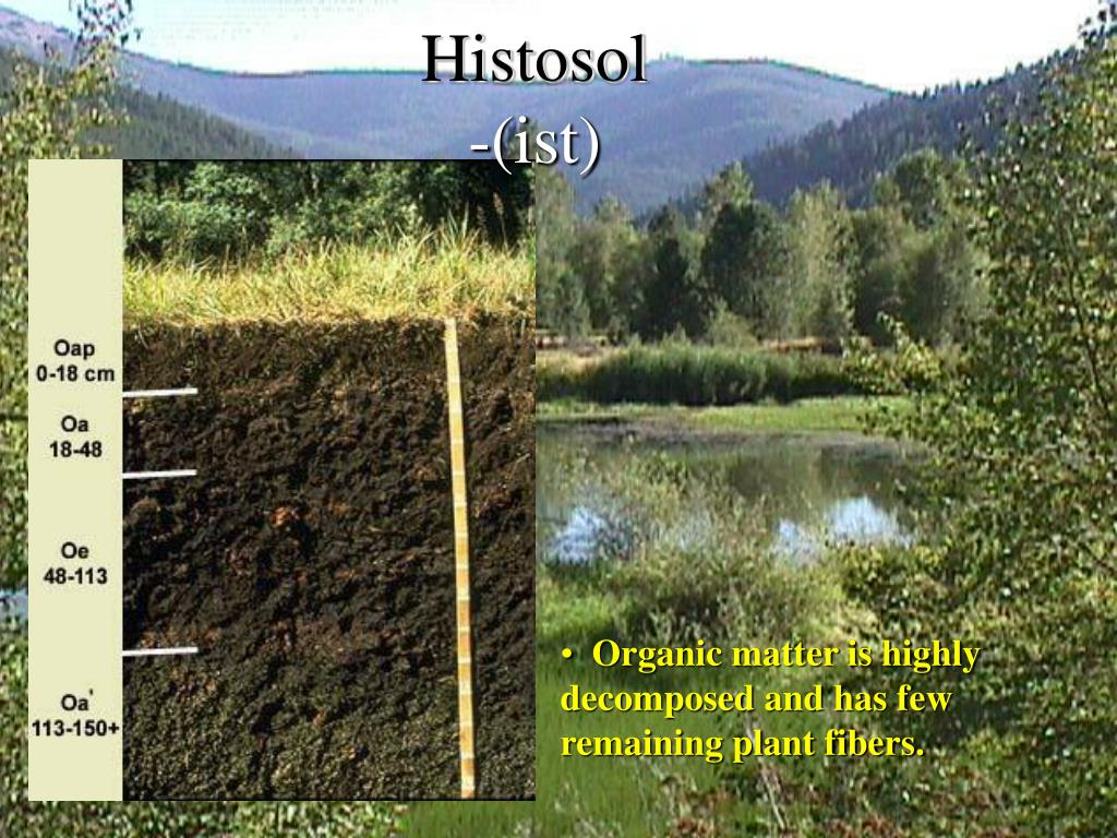 Histosol