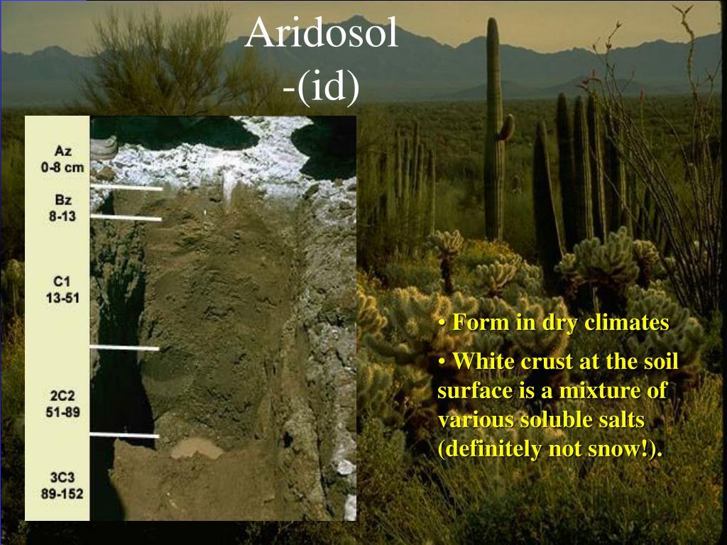 Aridosol