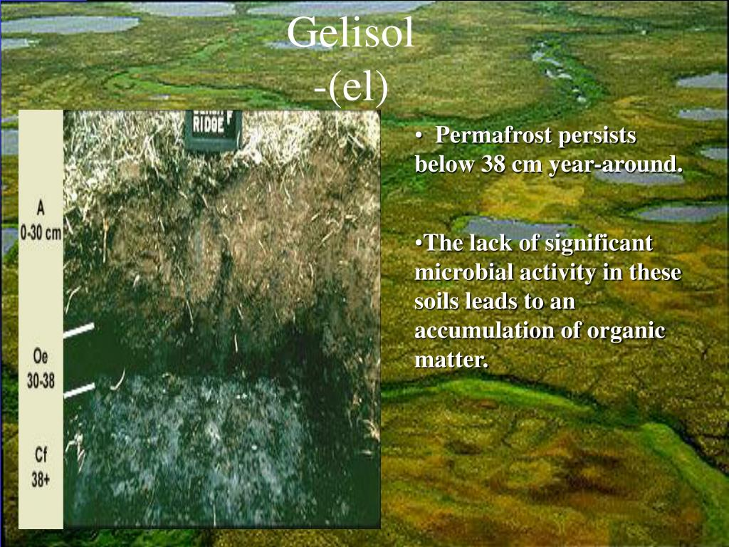 Gelisol