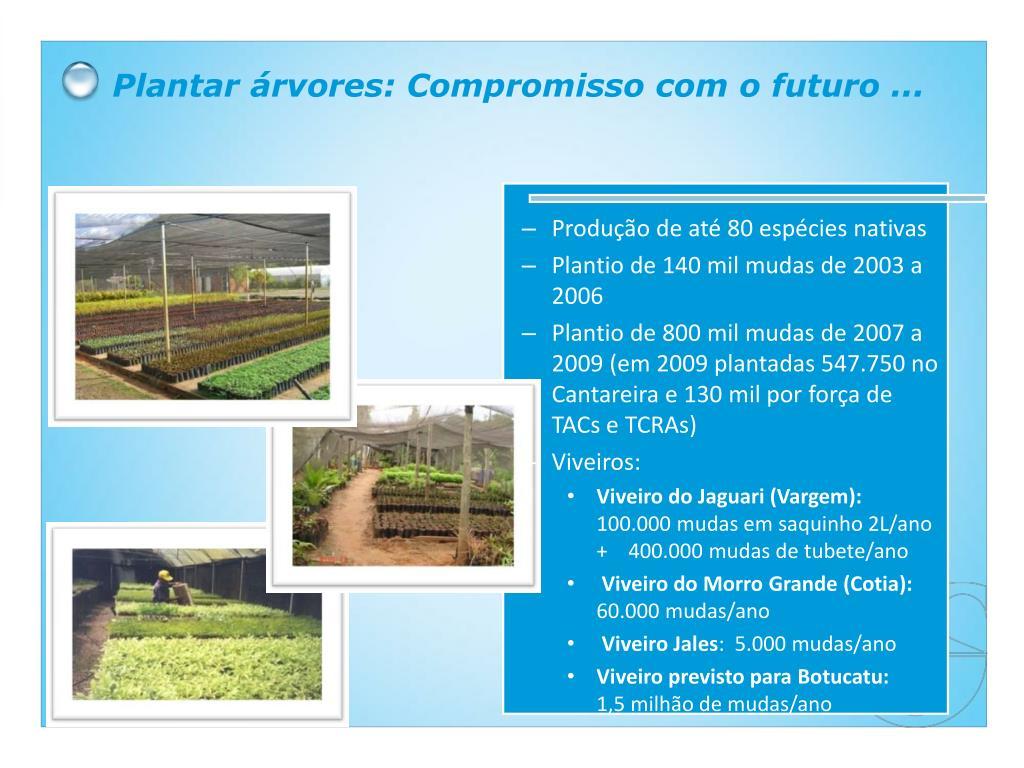 Plantar árvores: Compromisso com o futuro ...