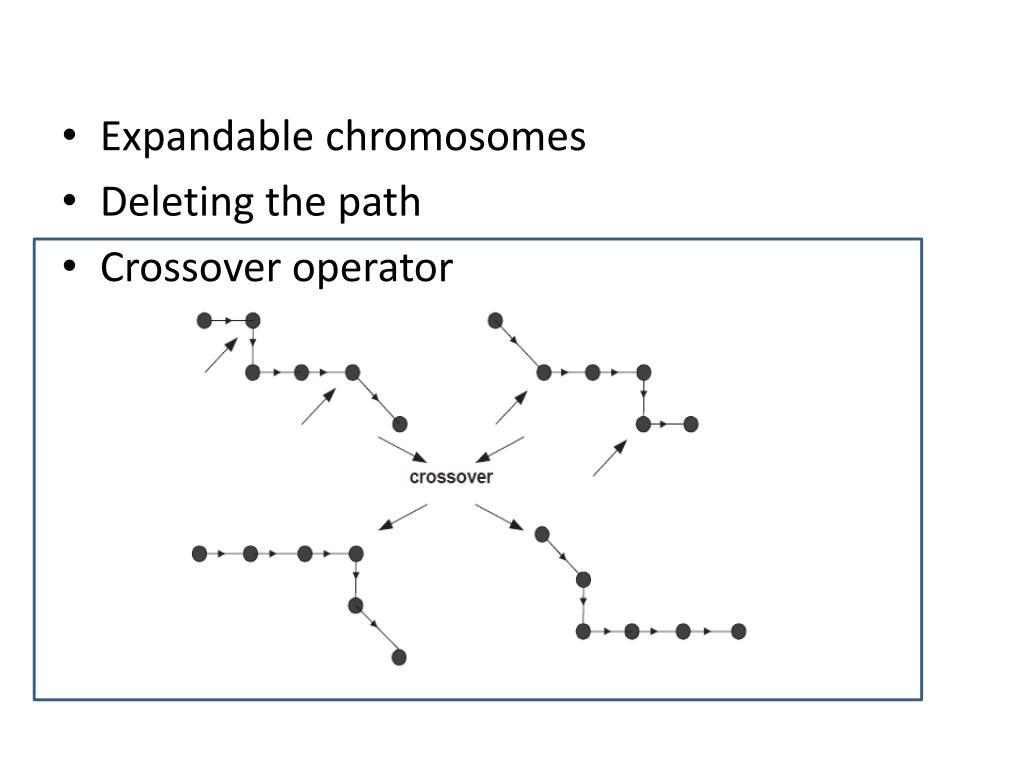 Expandable chromosomes