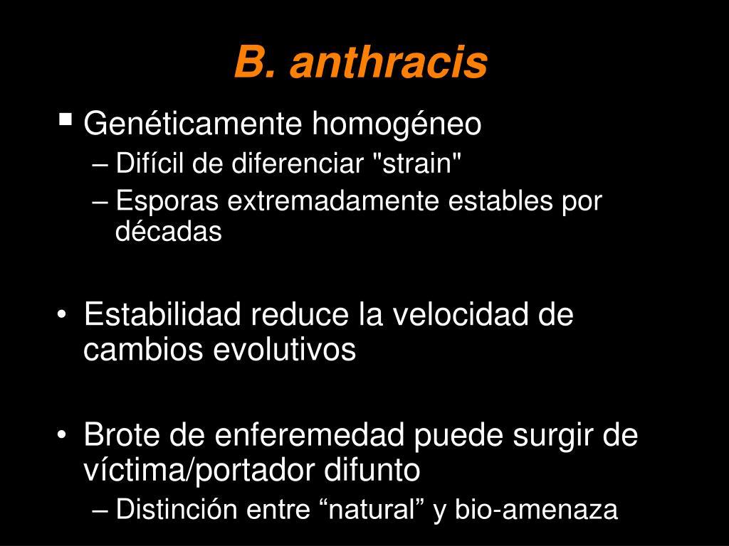 B. anthracis