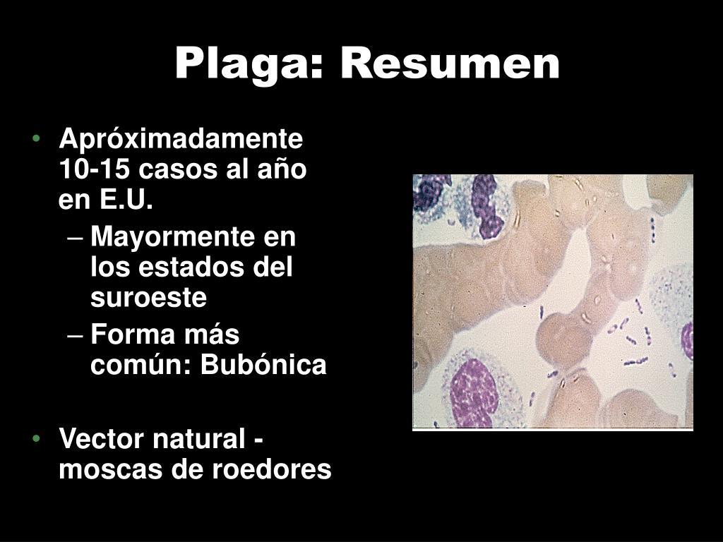 Plaga: Resumen