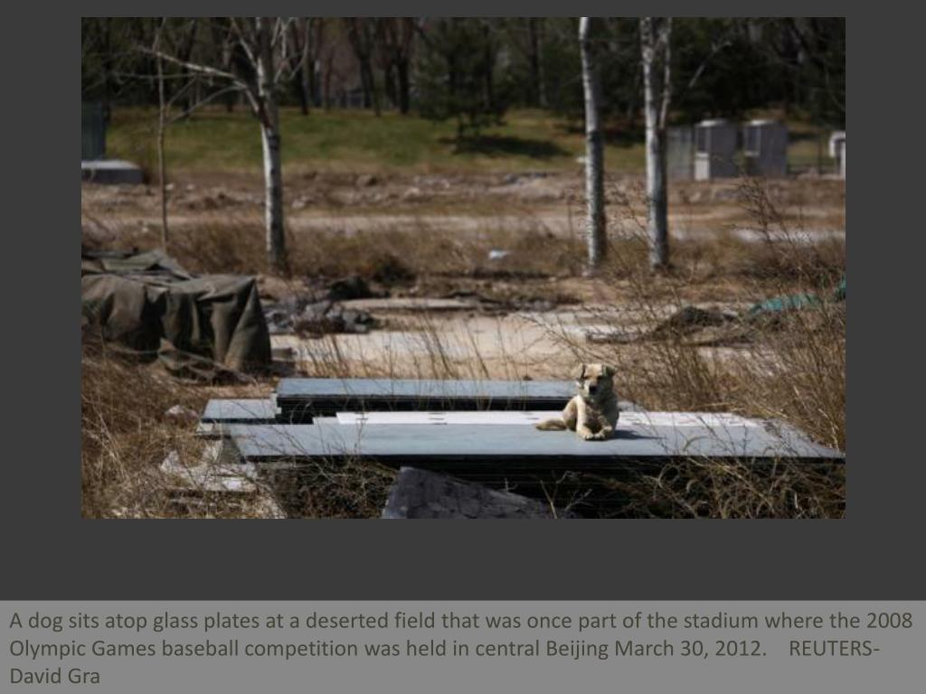 A dog sits atop glass plates at a deserted field that was once part of the stadium where the 2008 Olympic Games baseball competition was held in central Beijing March 30, 2012.    REUTERS-David Gra