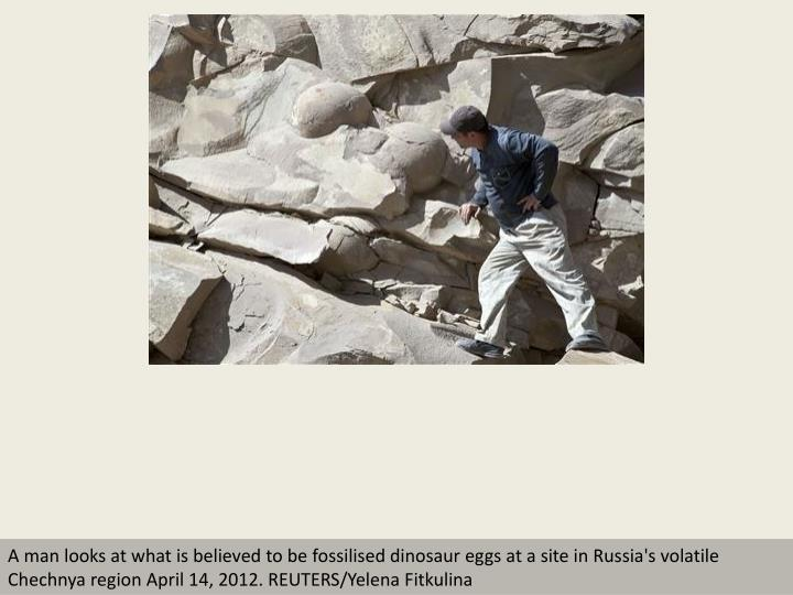 A man looks at what is believed to be fossilised dinosaur eggs at a site in Russia's volatile Chechn...
