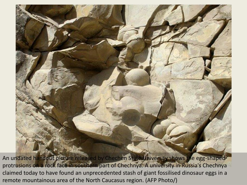 An undated handout picture released by Chechen State University shows the egg-shaped protrusions on a rock face in southern part of Chechnya. A university in Russia's Chechnya claimed today to have found an unprecedented stash of giant fossilised dinosaur eggs in a remote mountainous area of the North Caucasus region. (AFP Photo/)