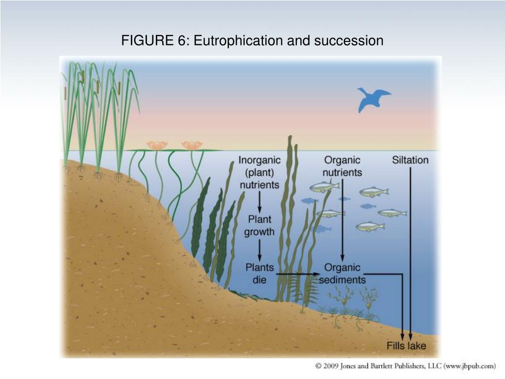 FIGURE 6: Eutrophication and succession