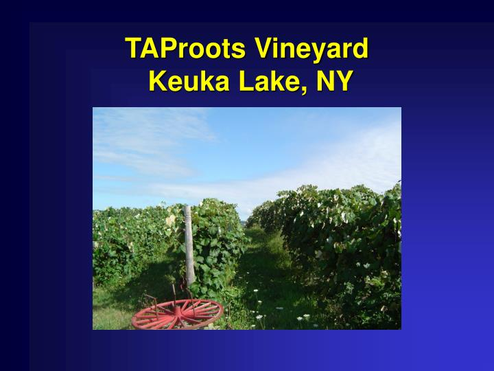 Taproots vineyard keuka lake ny