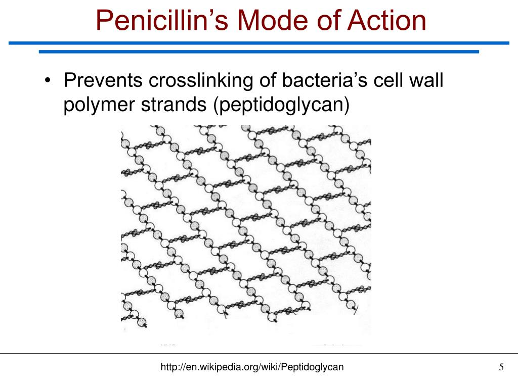 Penicillin's Mode of Action