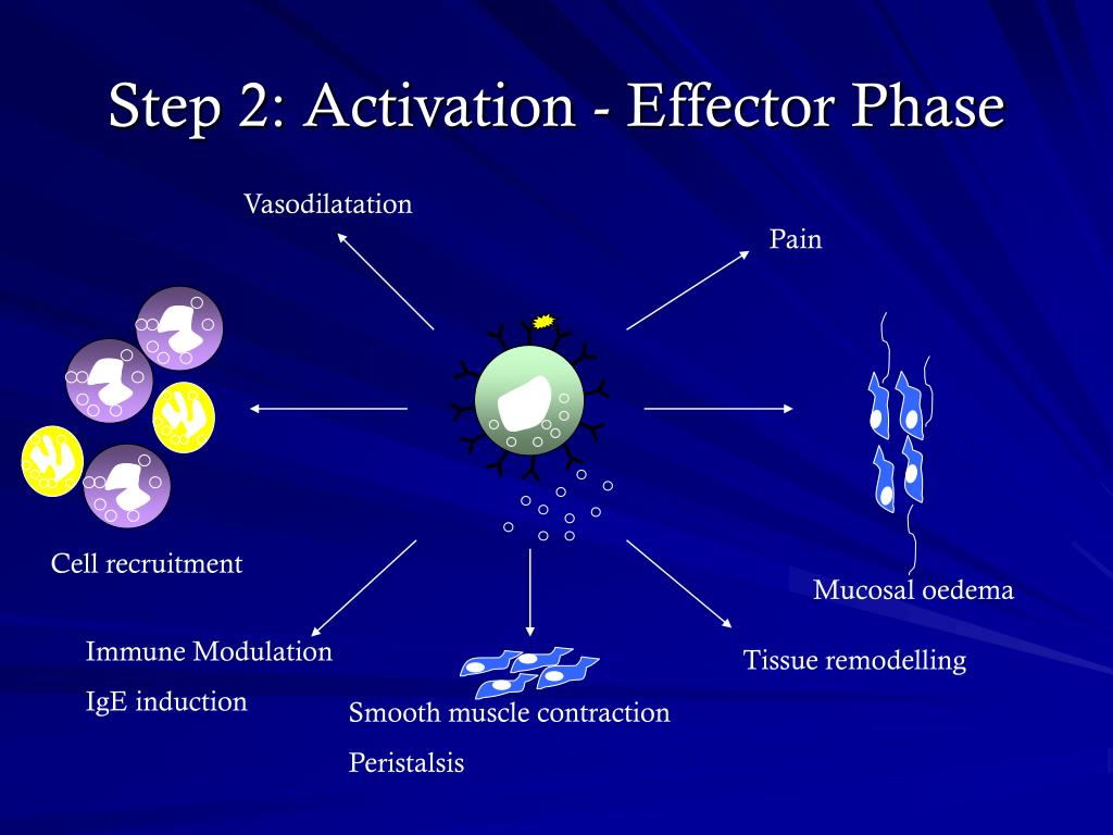 Step 2: Activation - Effector Phase