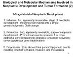 biological and molecular mechanisms involved in neoplastic development and tumor formation 2
