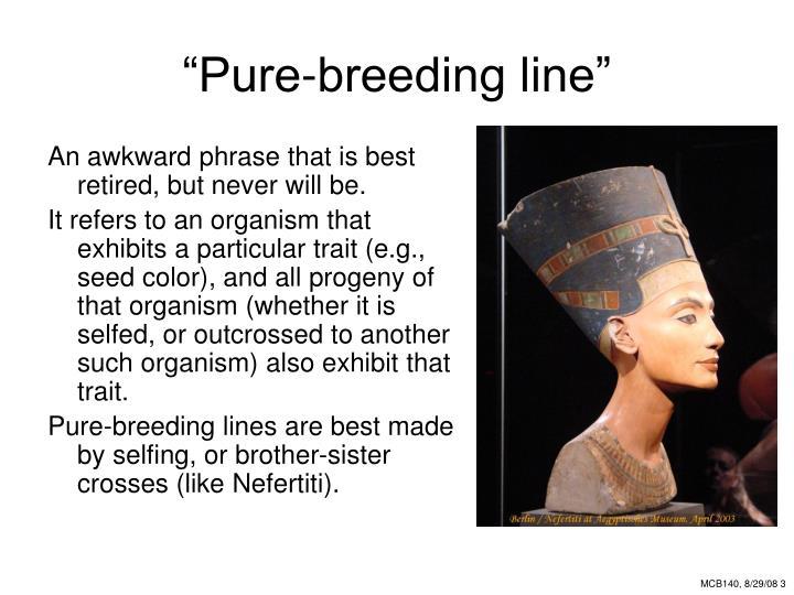 Pure breeding line