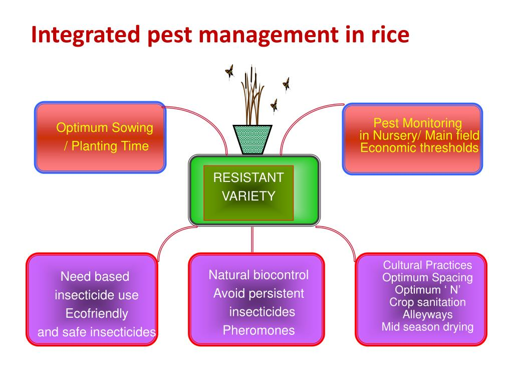Integrated pest management in rice