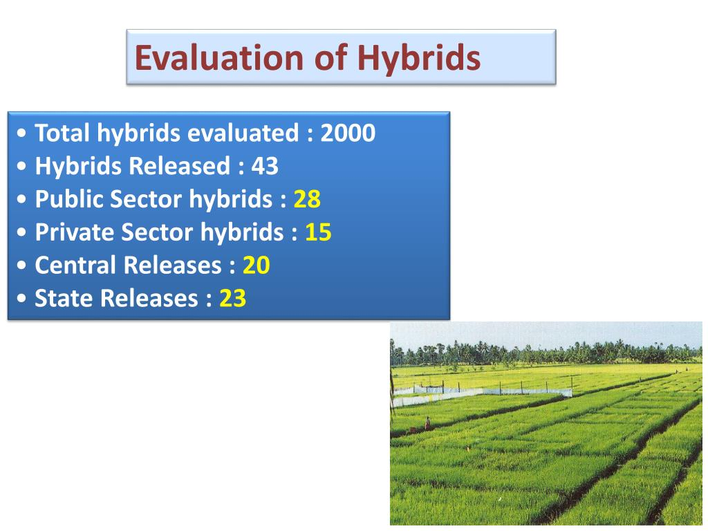 Evaluation of Hybrids