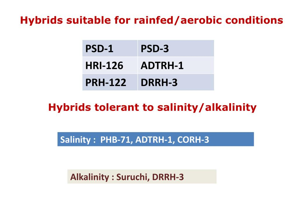 Hybrids suitable for rainfed/aerobic conditions