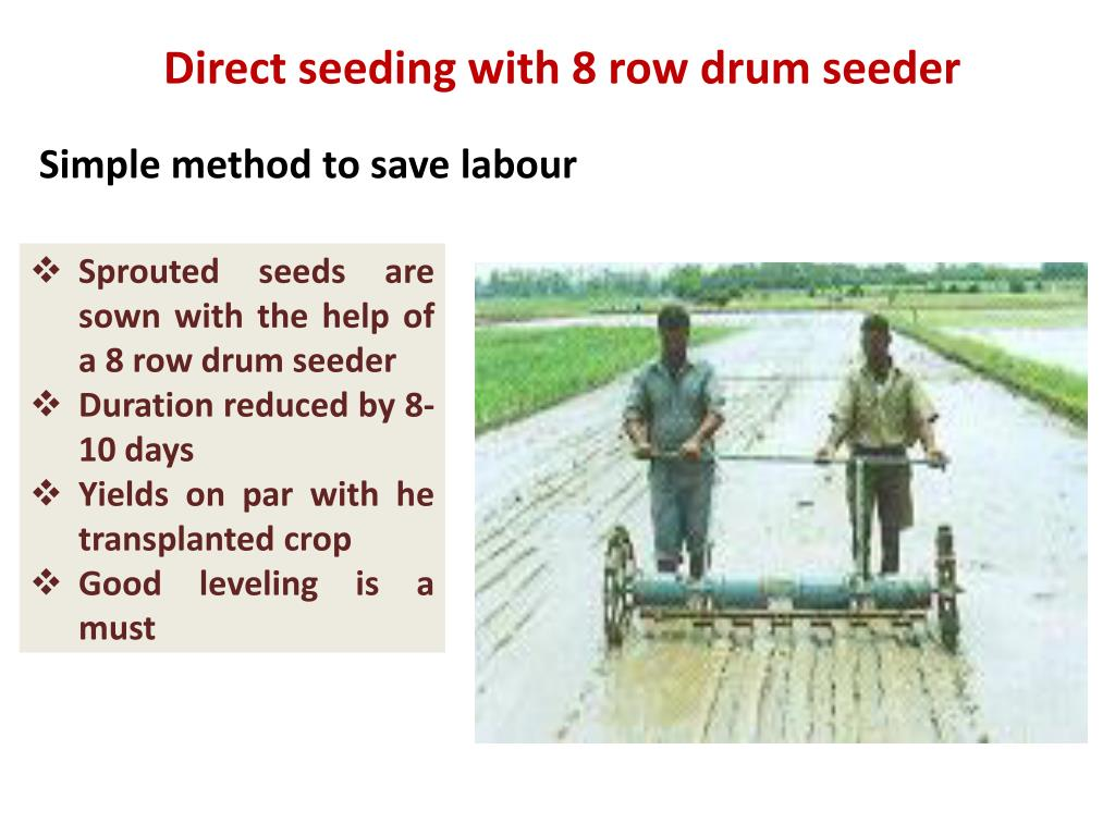 Direct seeding with 8 row drum seeder