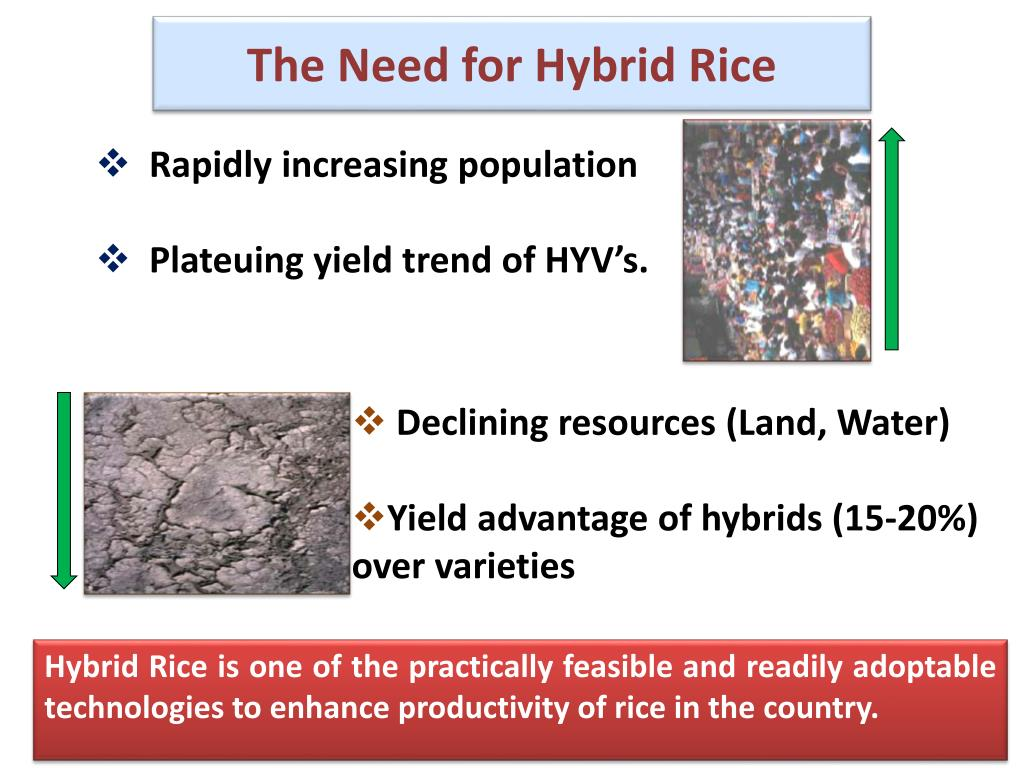 The Need for Hybrid Rice