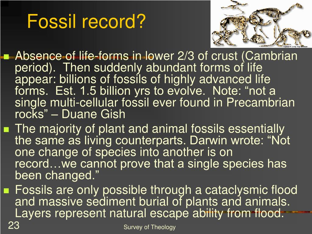 Fossil record?