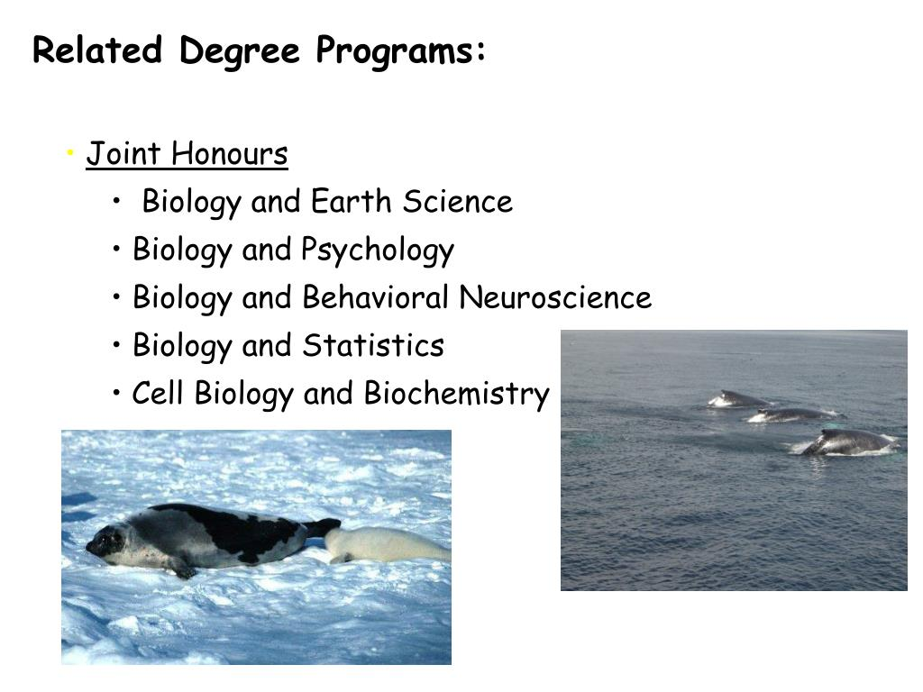 Related Degree Programs: