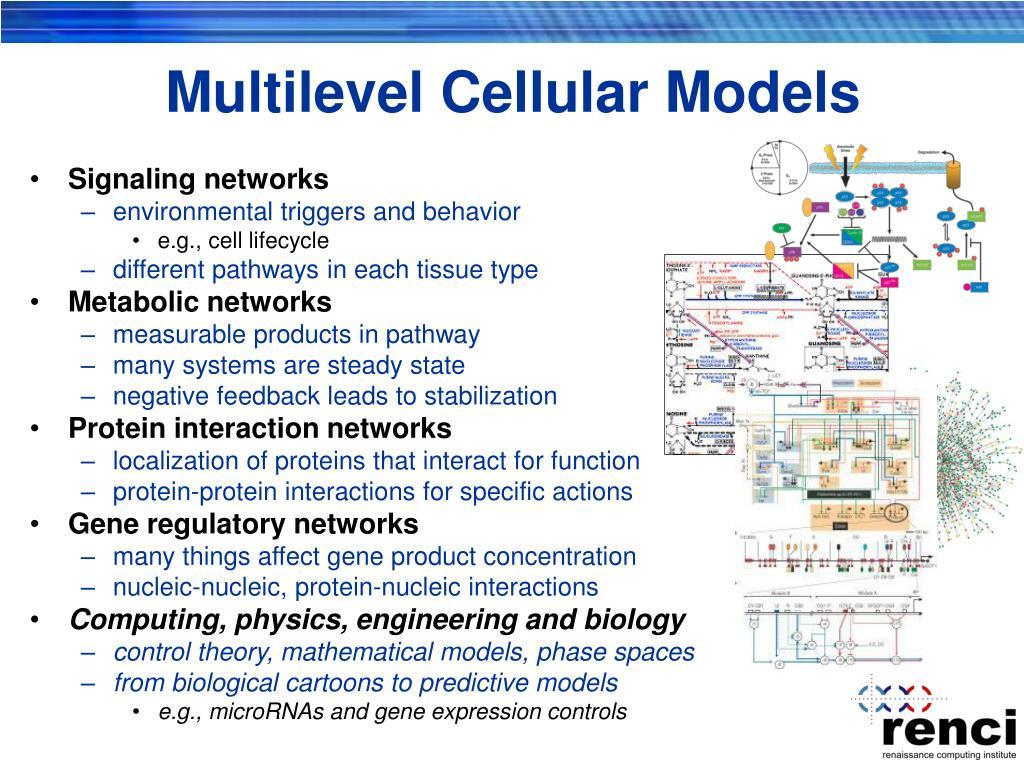 Multilevel Cellular Models