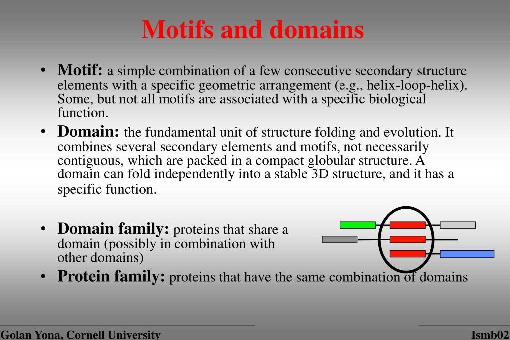 Motifs and domains