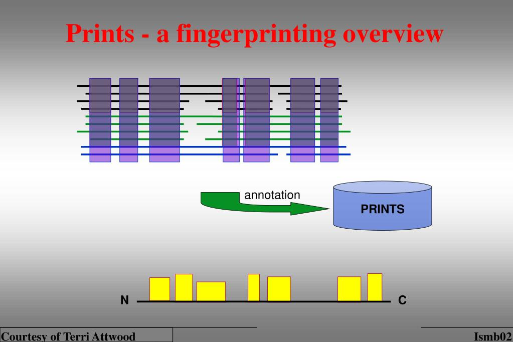 Prints - a fingerprinting overview