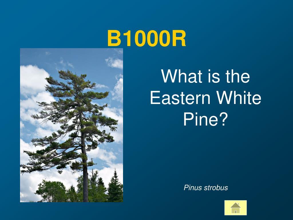 B1000R