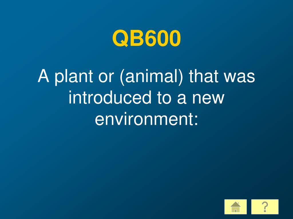 QB600