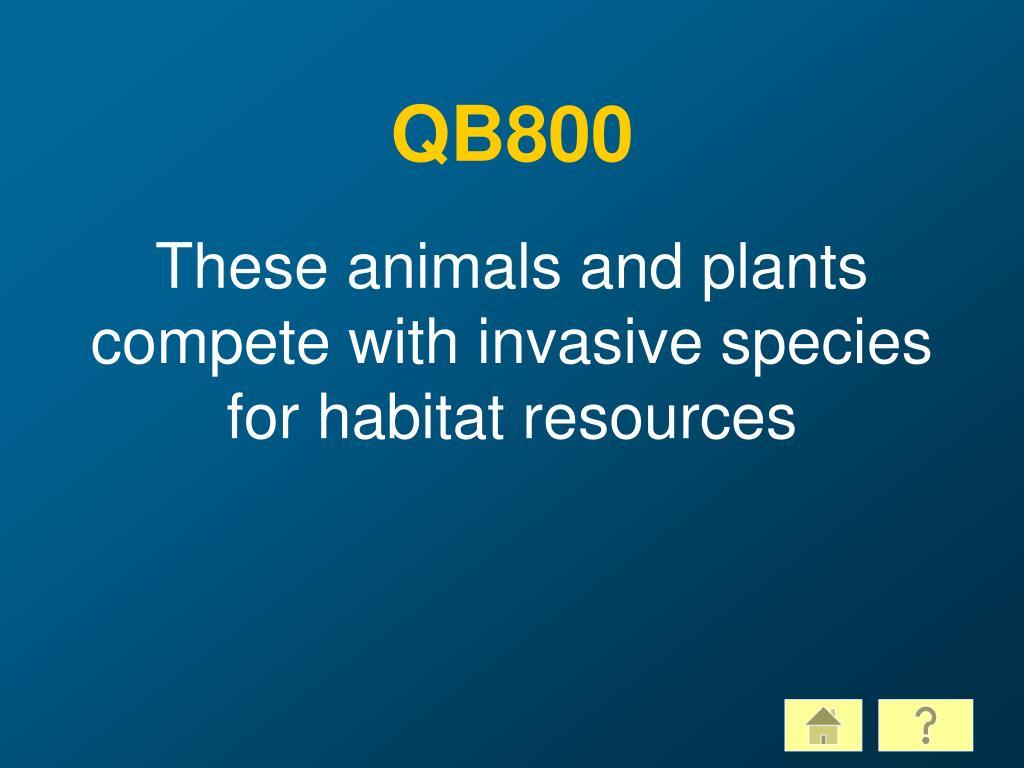 QB800
