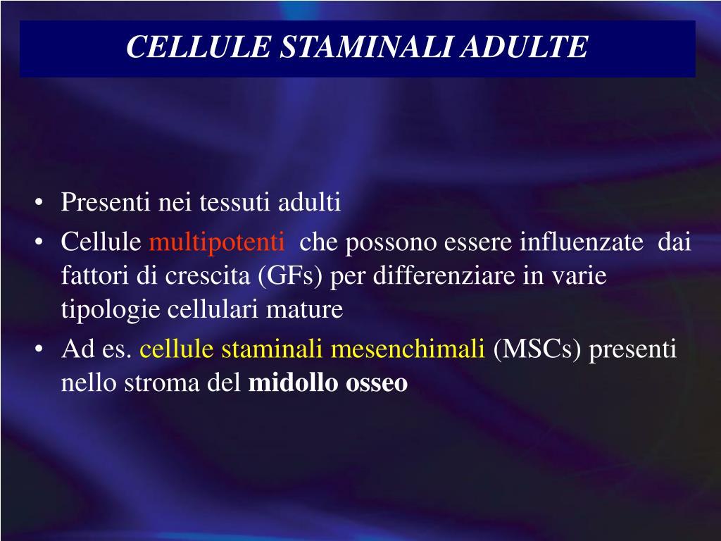 CELLULE STAMINALI ADULTE