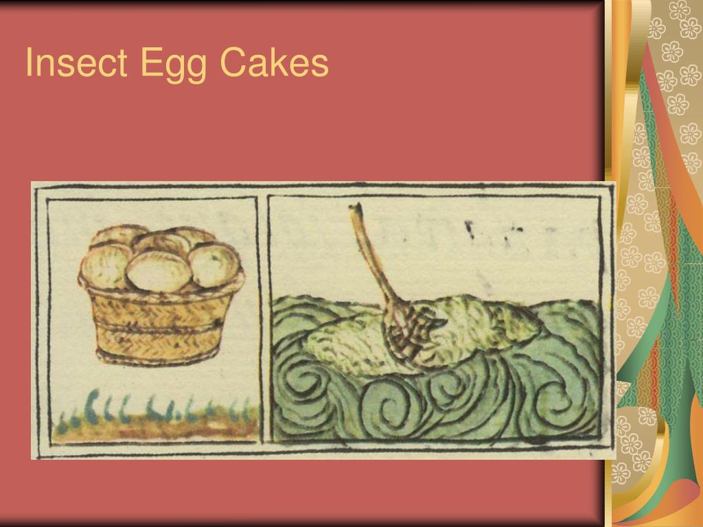 Insect Egg Cakes