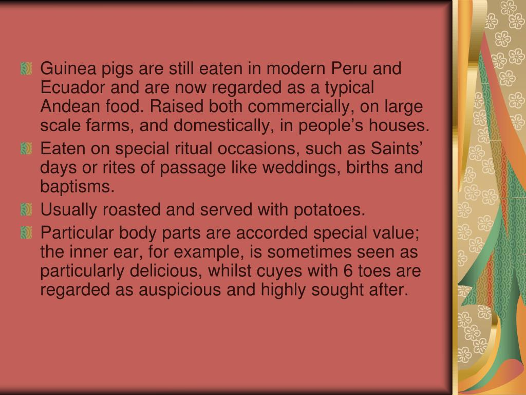 Guinea pigs are still eaten in modern Peru and Ecuador and are now regarded as a typical Andean food. Raised both commercially, on large scale farms, and domestically, in people's houses.