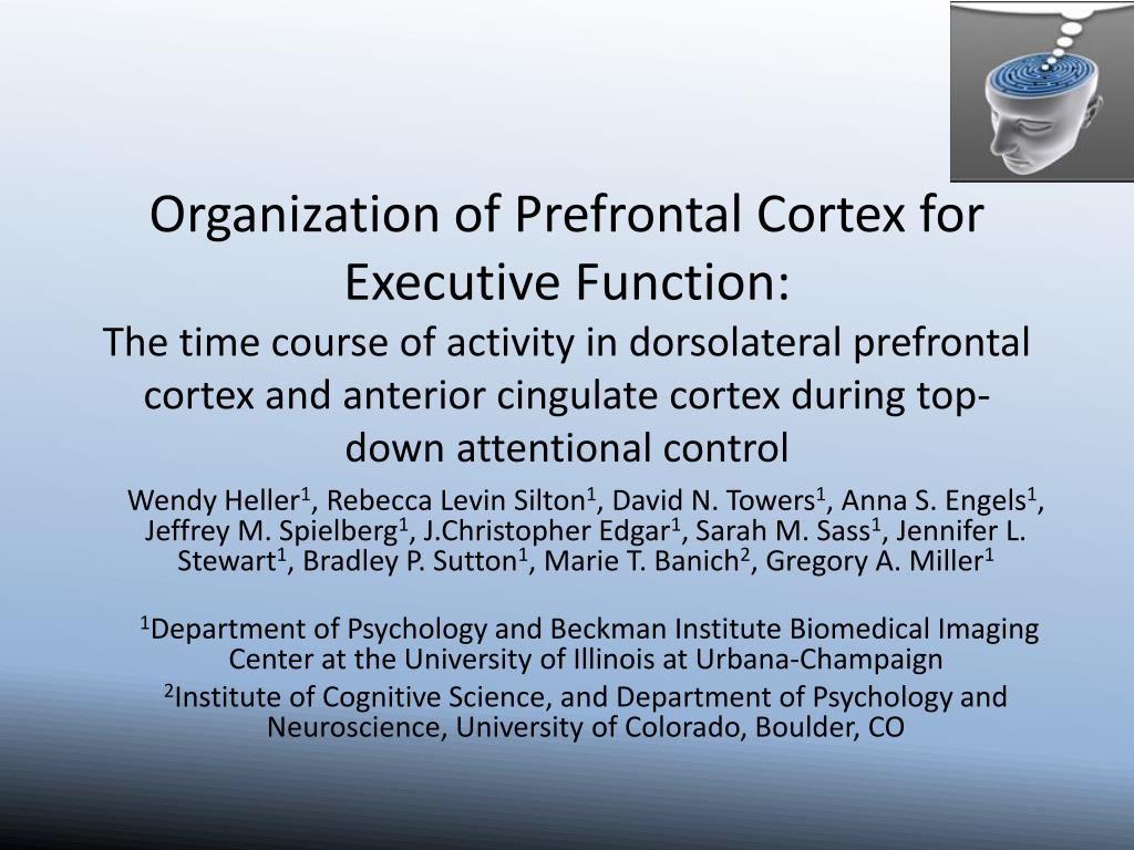Organization of Prefrontal Cortex for Executive Function: