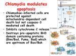 chlamydia modulates apoptosis